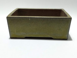 Maceta rectangular bonsai  Hideaki Youzan