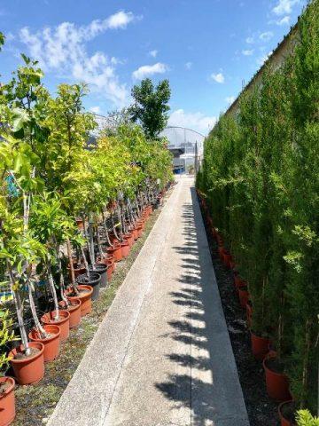 Prunus y malus en la zona de frutales.