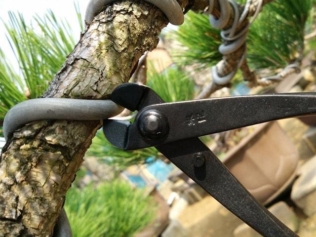 bonsa alica corta alambre