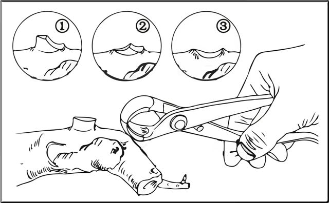 Esquema sencillo de uso de la podadora esférica