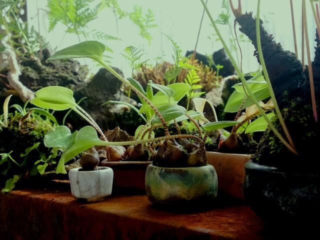 mames y minis en el invernadero