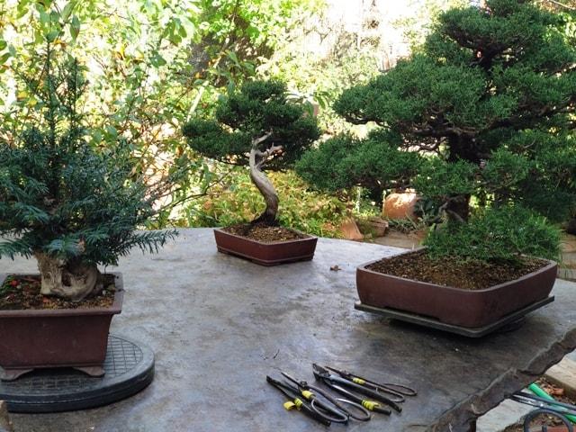 mesa de trabajo para bonsai