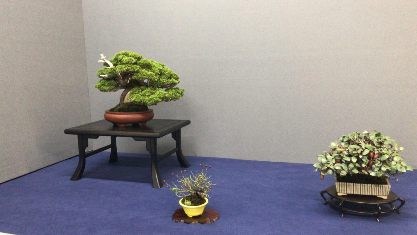 composicion bonsai shohin