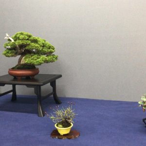 composicion bonsai shohin