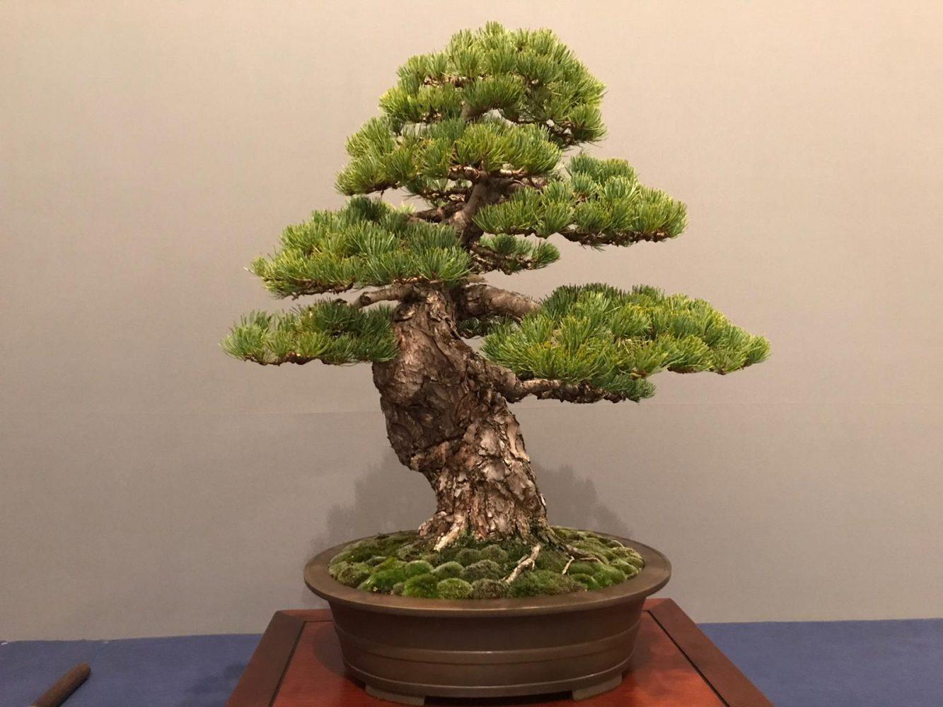 pino blanco eva perez