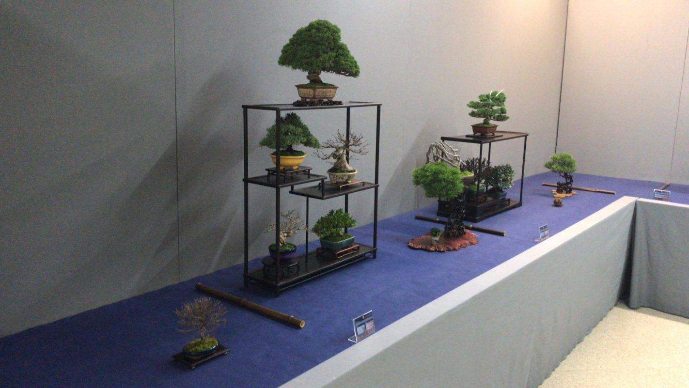 composición shohin bonsai