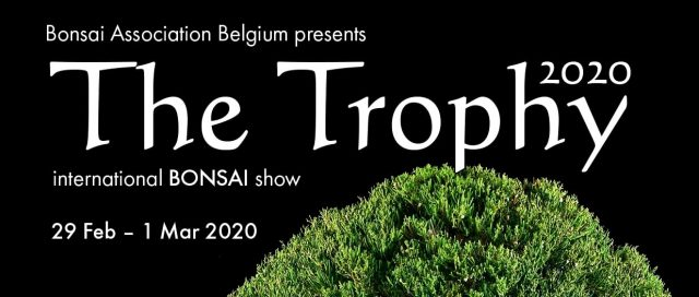 the trophy 20202 bonsai