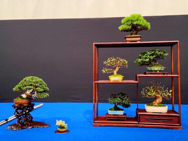 mueble con árboles tamaño shohin