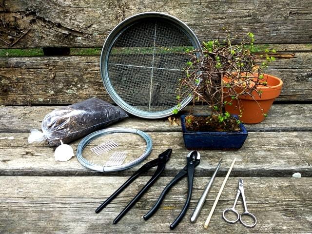 materiales y herramientas necesarias para el trasplante del bonsai.