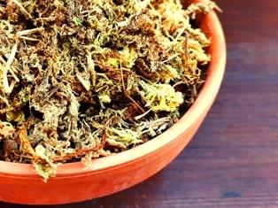 musgo sphagnum para conservar la humedad